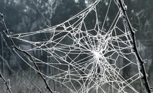 Toile d'araignée ensoleillée